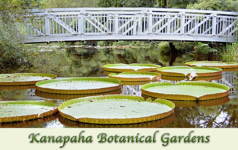 Kanapaha botanical gardens welcome to alachua for Gainesville botanical gardens