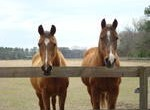 www.millcreekfarm.org We are open to the public every Saturday from 11am-3pm   Admission is 2 Carrots! Retirement Home for Horses at Mill Creek Farm is a not for profit equine sanctuary located […]