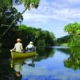 PLACE…….. Gainesville is the urban gateway to Florida's artesian springs—the largest constellation of freshwater springs in the world, with over 1000 bubbling forth from one of the most productive aquifers on...